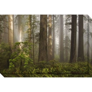 Canvas Art Gallery Wrap 'Morning Light Forest' by David Lorenz Winston 30 x 20-inch