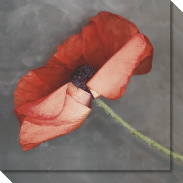Canvas Art Gallery Wrap 'Rouge Poppy' by Erin Clark 20 x 20-inch