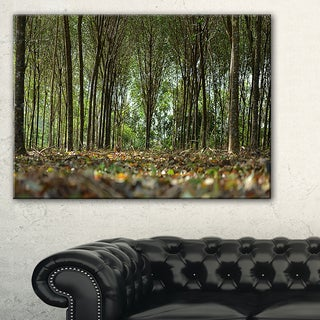Dense Rubber Tree Plantation - Landscape Art Print Canvas