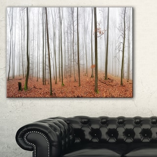Fall Forest with Trees at Mist - Oversized Forest Canvas Artwork
