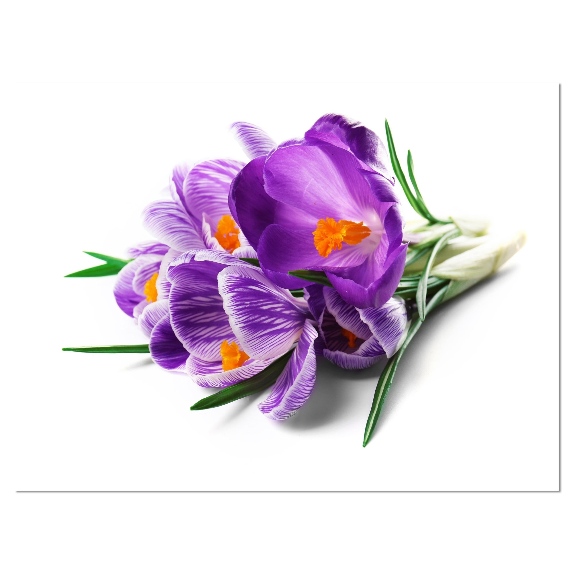 Shop Bunch Of Blooming Crocus Flowers Large Floral Wall Art