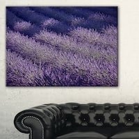 Lavender Field and Ray of Light - Oversized Landscape Wall Art Print - Blue