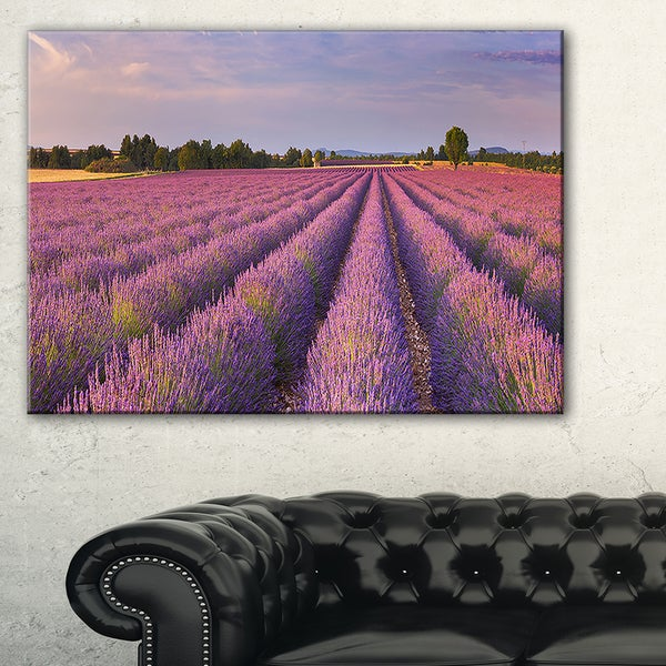 Lavender Flower Rows in France - Landscape Art Canvas Print - Purple
