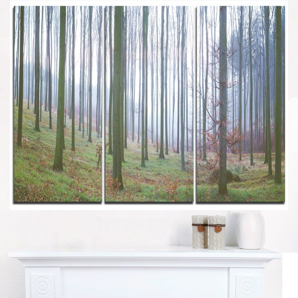 Autumn Tree Trunks Panorama - Oversized Forest Canvas Artwork - Green