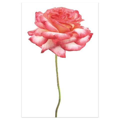 Pink Rose' Graphic Wall Art on Free Floating Tempered Glass Panel