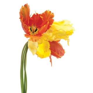 Empire Art 'Orange Yellow Parrot Tulip' Frameless Free-floating Tempered Art Glass
