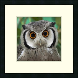 Framed Art Print 'Southern White-faced Owl portrait' by San Diego Zoo 21 x 21-inch