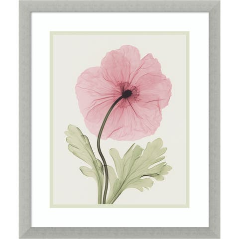 Framed Art Print 'Iceland Poppy I' by Steven N. Meyers 17 x 20-inch