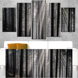 Sunbeams Peeking Through Dark Forest - Large Forest Wall Art Canvas