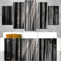 Sunbeams Peeking Through Dark Forest - Large Forest Wall Art Canvas - Multi-color