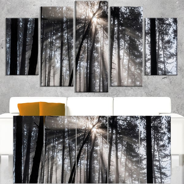 Shop Sunbeams through Black White Forest - Forest Canvas Wall Art ...