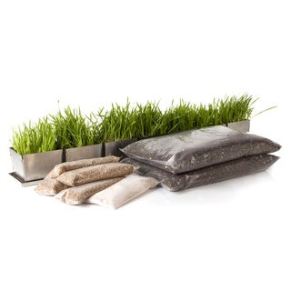 Starter Daily Tray Wheatgrass Kit