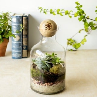 56-ounce Glass Succulent Terrarium with Wood Stopper