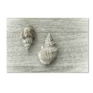 Cora Niele 'Two Cancellaria Shells' Canvas Art