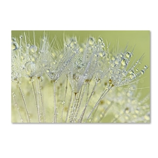 Cora Niele 'Dandelion Dew I' Canvas Art