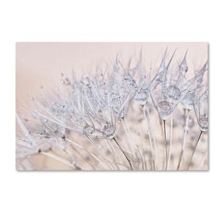Cora Niele 'Dandelion Dew II' Canvas Art