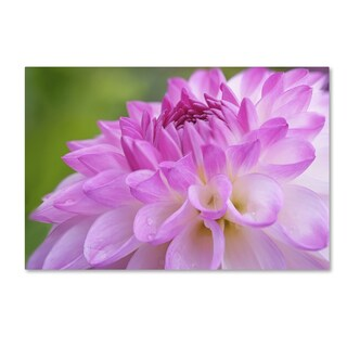 Cora Niele 'Cerise Pink Dahlia' Canvas Art
