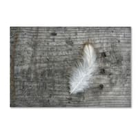 Cora Niele 'Feather on Rough Wood' Canvas Art