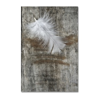 Cora Niele 'White Feather on Wood' Canvas Art