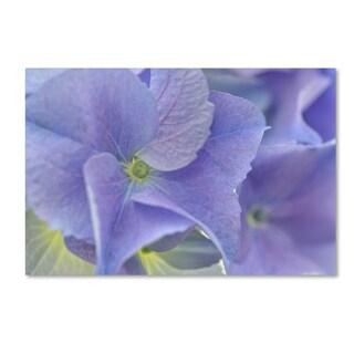 Cora Niele 'Blue Hortensia' Canvas Art