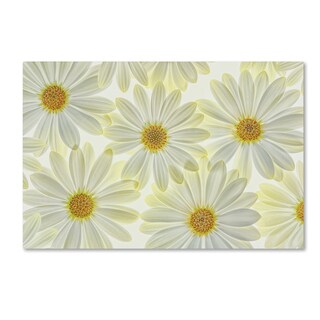 Cora Niele 'Daisy Flowers' Canvas Art