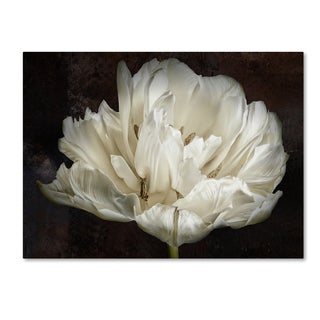 Cora Niele 'Double White Tulip' Canvas Art