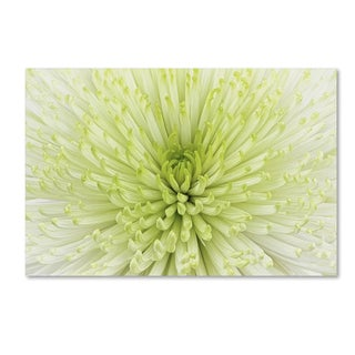 Cora Niele 'Lime Light Spider Mum' Canvas Art