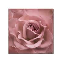 Cora Niele 'Misty Rose Pink Rose' Canvas Art