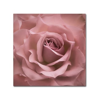 Cora Niele 'Misty Rose Pink Rose' Canvas Art