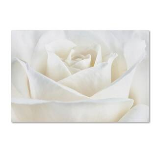 Silver Orchid Crain Cora Niele 'Pure White Rose' Canvas Art