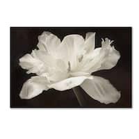 Cora Niele 'White Tulip I' Canvas Art