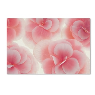 Cora Niele 'Rose Begonia Flowers' Canvas Art