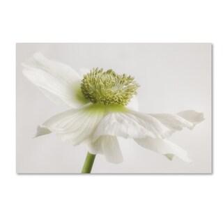 Cora Niele 'White Anemone Flower' Canvas Art