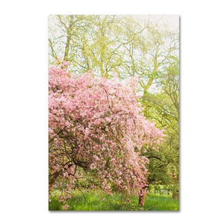 Ariane Moshayedi 'Pink Cherry Blossoms' Canvas Art