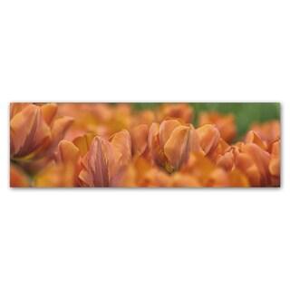Cora Niele 'Orange Tulip Scape' Canvas Art