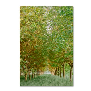 Ariane Moshayedi 'Tree Tunnel' Canvas Art