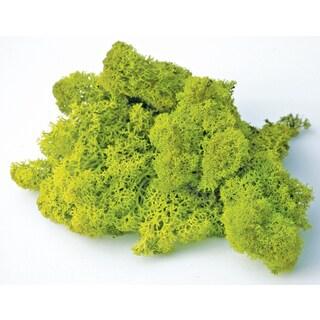 Super Moss 25111 8-ounces Chartreuse Reinder Moss