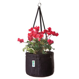Geopot HG-2GAL 8-Inches Hanging Basket