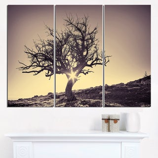 Lonely Grey Tree in Mountain - Extra Large Wall Art Landscape