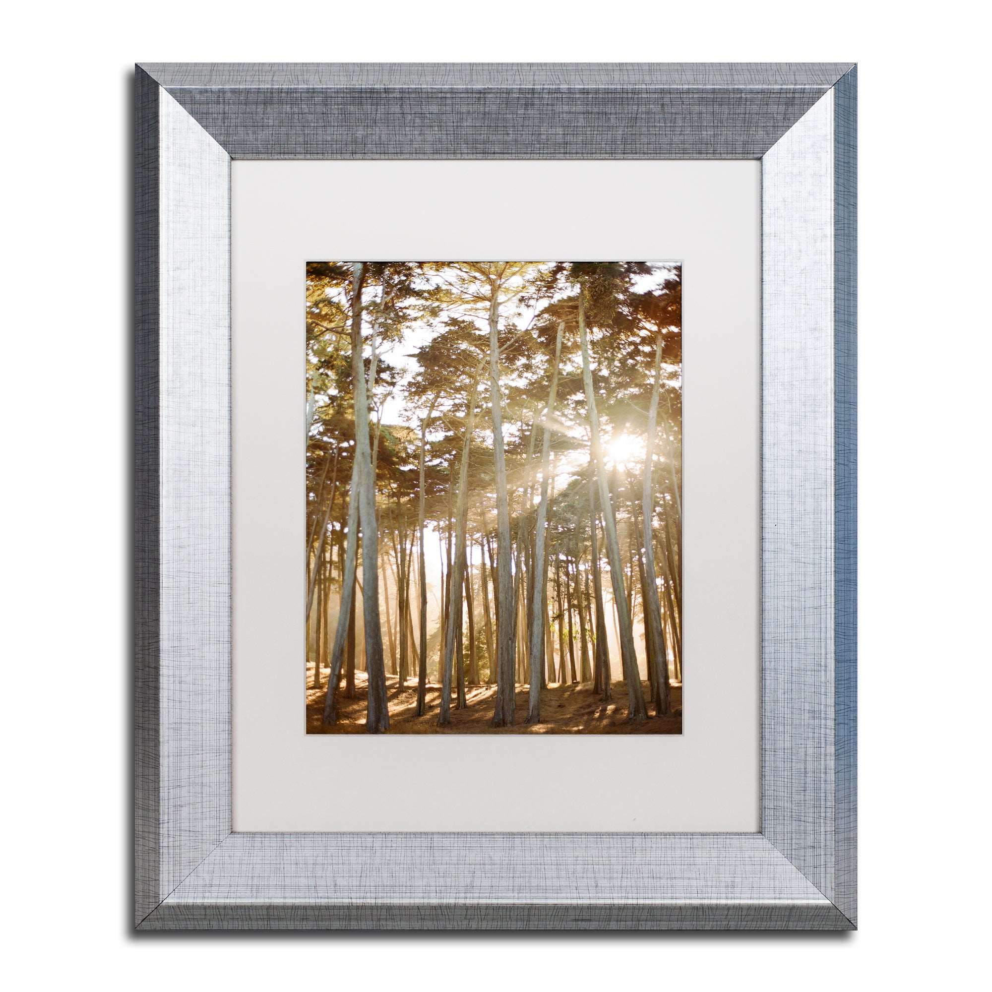 Ariane Moshayedi Presidio Sunset Trees Matted Framed Art Overstock 12390805