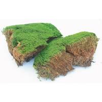 Super Moss 21539 8-ounce Preserved Mood Moss