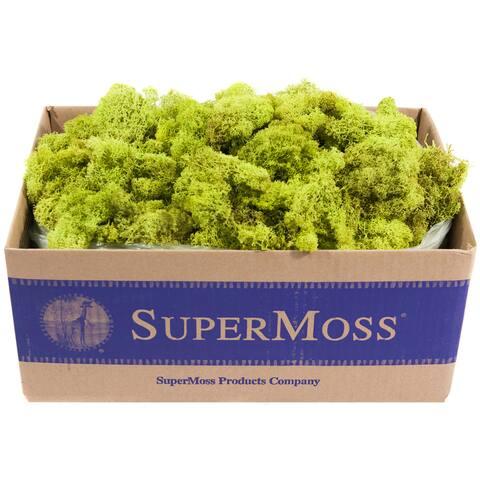 Super Moss 21773 3-pounds Bulk Chartreuse Preserved Reindeer Moss