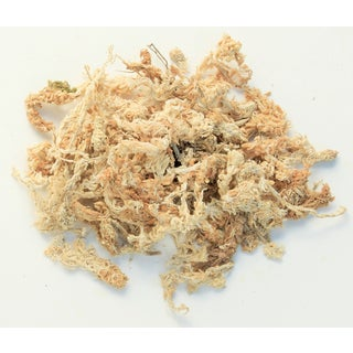 Super Moss 22330 2.2-pounds Orchid Sphagnum Moss