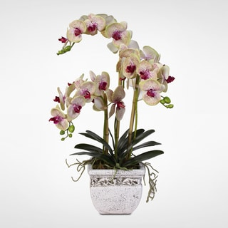 Real Touch Phalaenopsis Silk Orchid Arrangement in a Stone Pot
