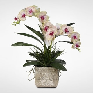Real Touch Phalaenopsis Silk Orchids with Decorative Grasses in a Stone Pot