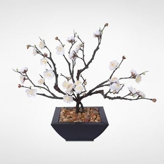 White Plum Blossom Bonsai with Natural Rocks in a Metal Container