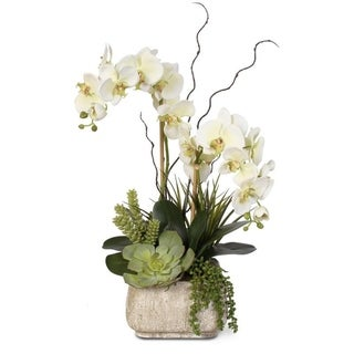Real Touch Cream Green Phalaenopsis Silk Orchid Arrangement with Succulents in a Stone Pot