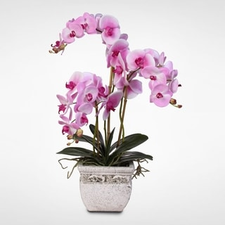 Real Touch Pink Phalaenopsis Silk Orchids with Leaves in a Stone Pot