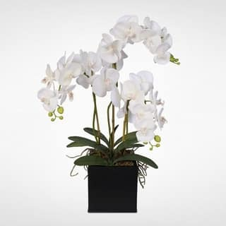 Real Touch Phalaenopsis Silk Orchids with Succulents in a Metal Pot|https://ak1.ostkcdn.com/images/products/12401177/P19221459.jpg?impolicy=medium