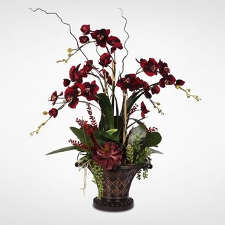 Velvet Red/ Burgundy Phalaenopsis Orchid Arrangement with Succulents in a Deco Container